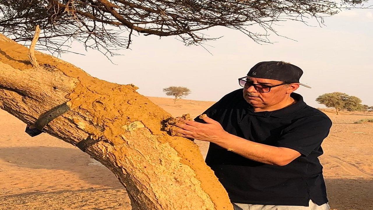 بالصور..ناشط بيئي يحاول إنقاذ شجرة من الانشطار بعد العبث بها بوادي مرخ