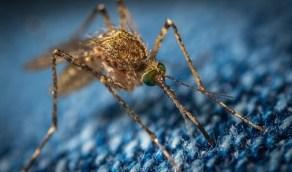 حمى الضنك تظهر في الصين تزامنًا مع الطاعون الدبلي