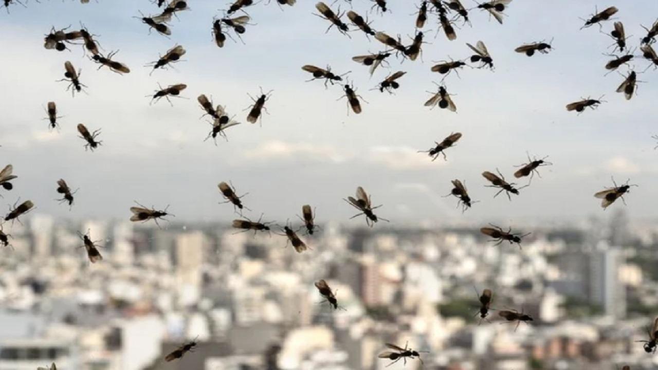 حشرات طائرة تكسو سماء بريطانيا