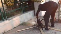 بالفيديو.. شخص يشوي قطة أمام المارة