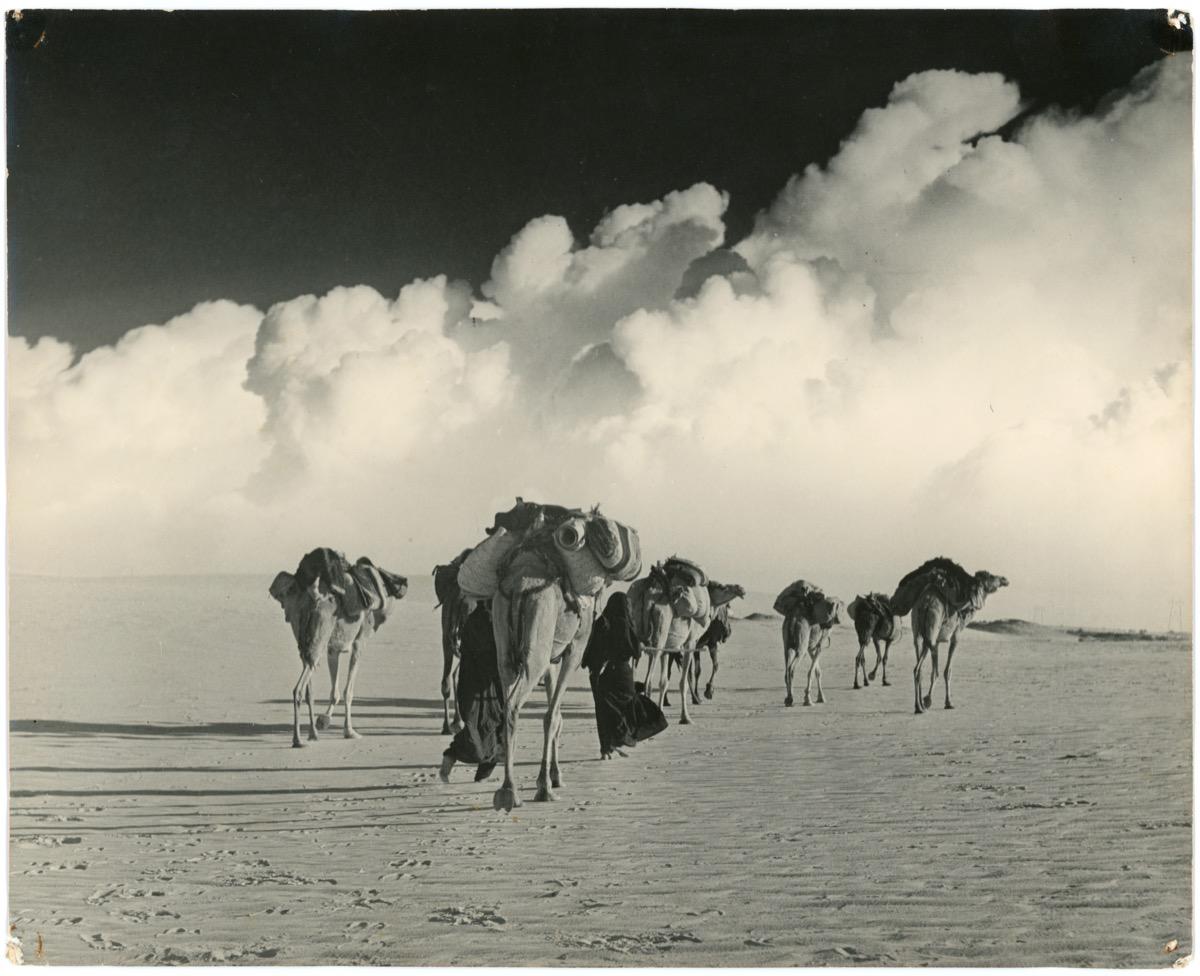 صورة جميلة ومعبرة لعهد السفر بواسطة الإبل