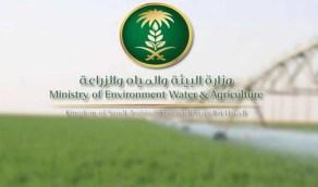"""""""البيئة"""" تطلق 20 خدمة إلكترونية جديدة لمشاريع الثروة النباتية عبر """"زراعي"""""""