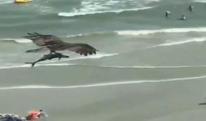بالفيديو .. سمكة ضخمة تحاول النجاة من قبضة طائر