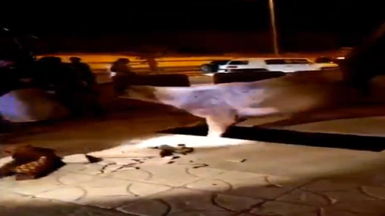 بالفيديو.. خيل يسقط في حُفرة بكورنيش محافظة حقل