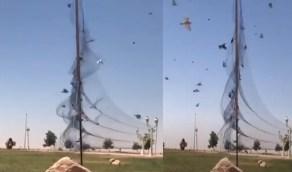 التحقيق في فيديو نصب شبكة لصيد الطيور في أحد منتزهات المملكة
