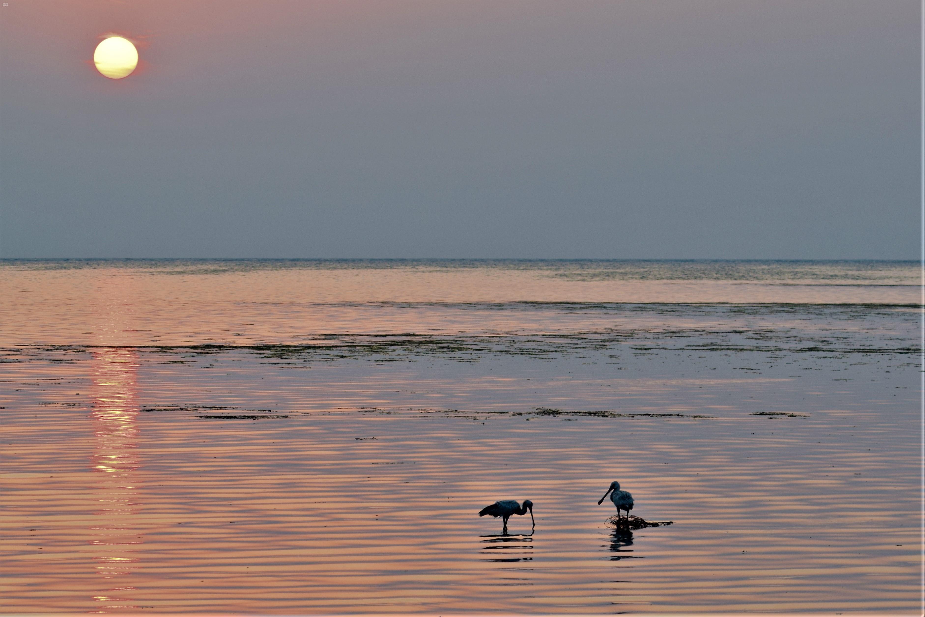 كورنيش الطيور المهاجرة من أهم الوجهات السياحية بالمملكة