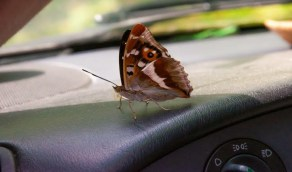 حلول بسيطة للتخلص من الحشرات داخل السيارة
