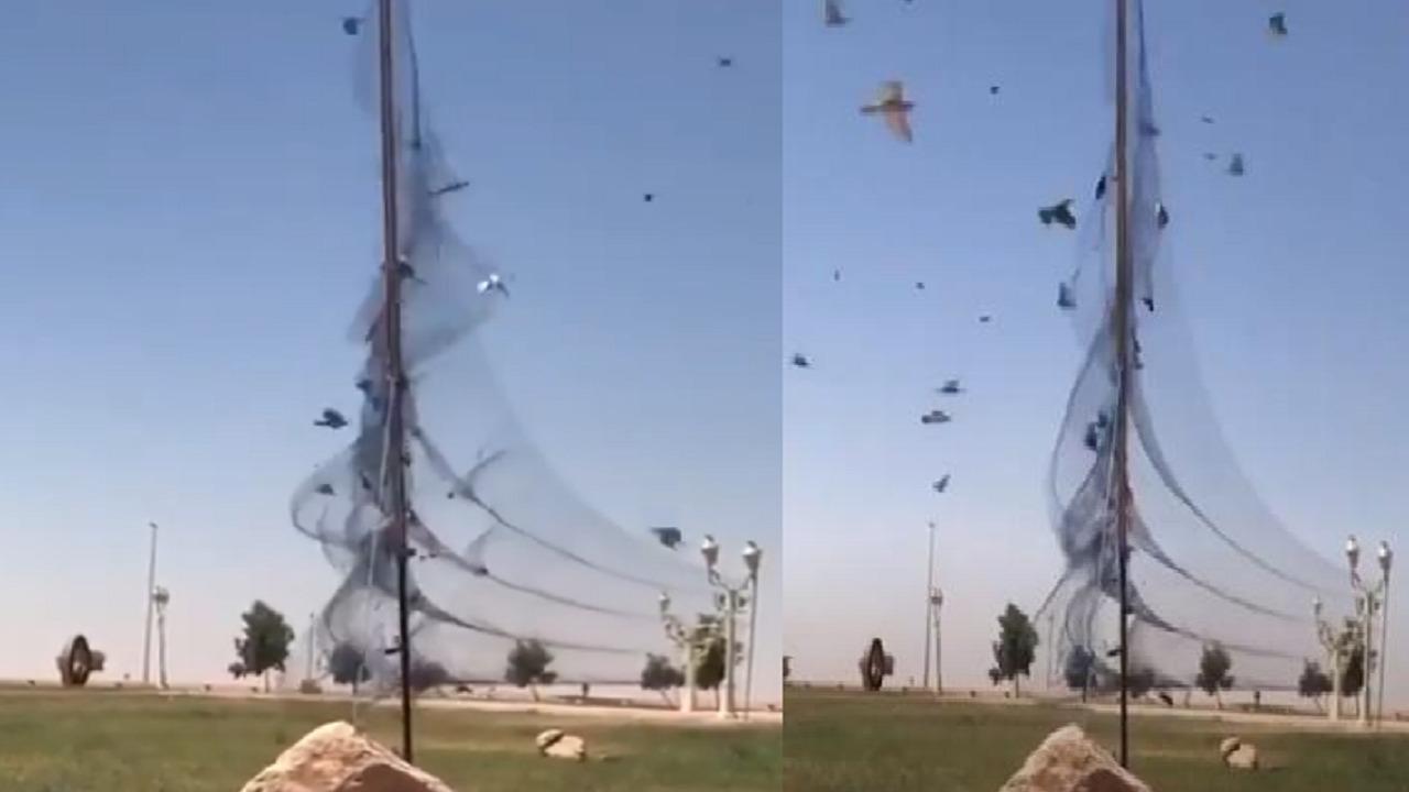 هيئة «الحياة الفطرية» تعلق على فيديو شباك صيد الطيور بأحد المتنزهات العامة
