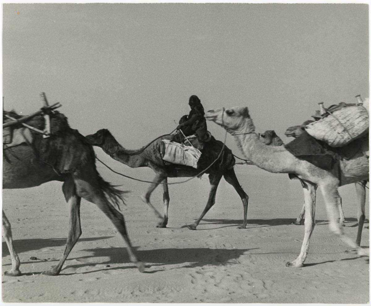 صورة فنية جميلة لامرأة ترتحل في صحراء الشرقية قديما
