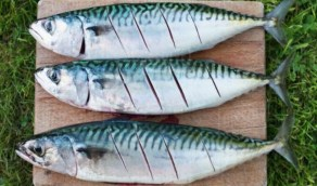 «البيئة» تعلن بدء تطبيق حظر صيد وتداول أسماك الكنعد