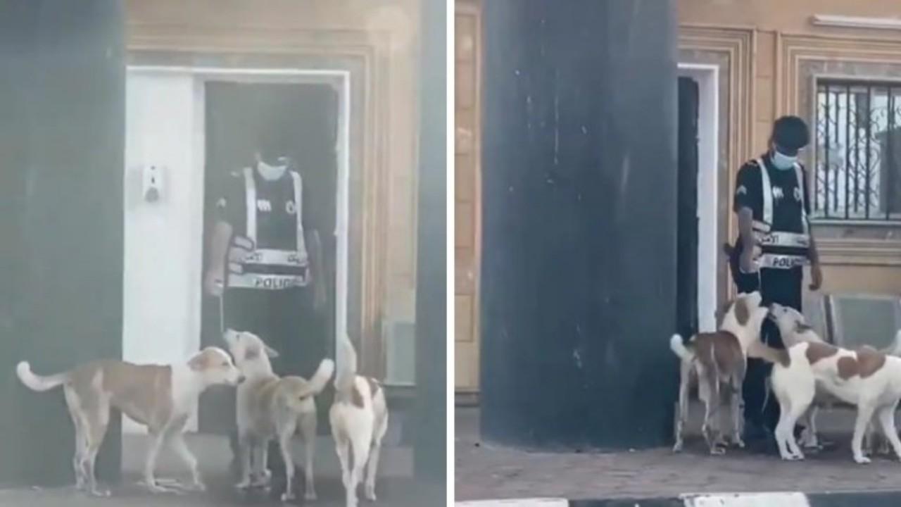 بالفيديو.. إنسانية رجل أمن يسقي كلابًا أنهكها العطش بأحد مراكز الضبط الأمني