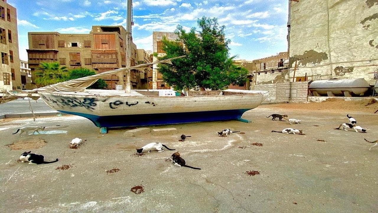 بالصور.. مواطنون يجوبون شوارع «جدة البلد» لإطعام وسقاية القطط