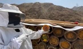 بالصور.. فتاة من رجال ألمع تهزم الصعب وتعمل نحالة وتنتج العسل الطبيعي