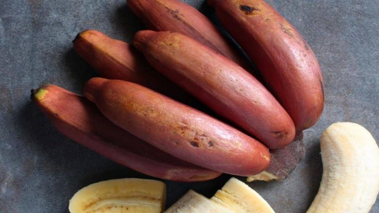 الموز الأحمر ينعش جهاز المناعة ويعزز صحة العين