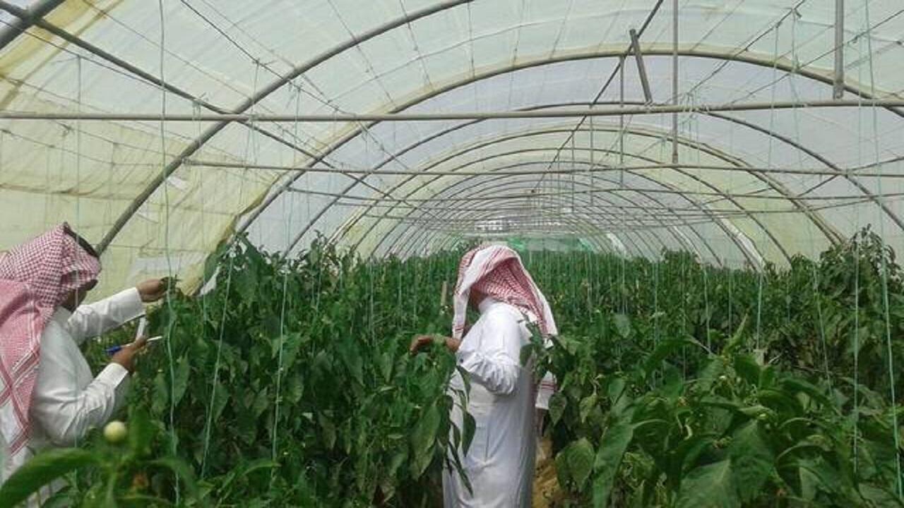 توجه لزيادة قروض المشاريع الزراعية إلى 3.5 مليار ريال