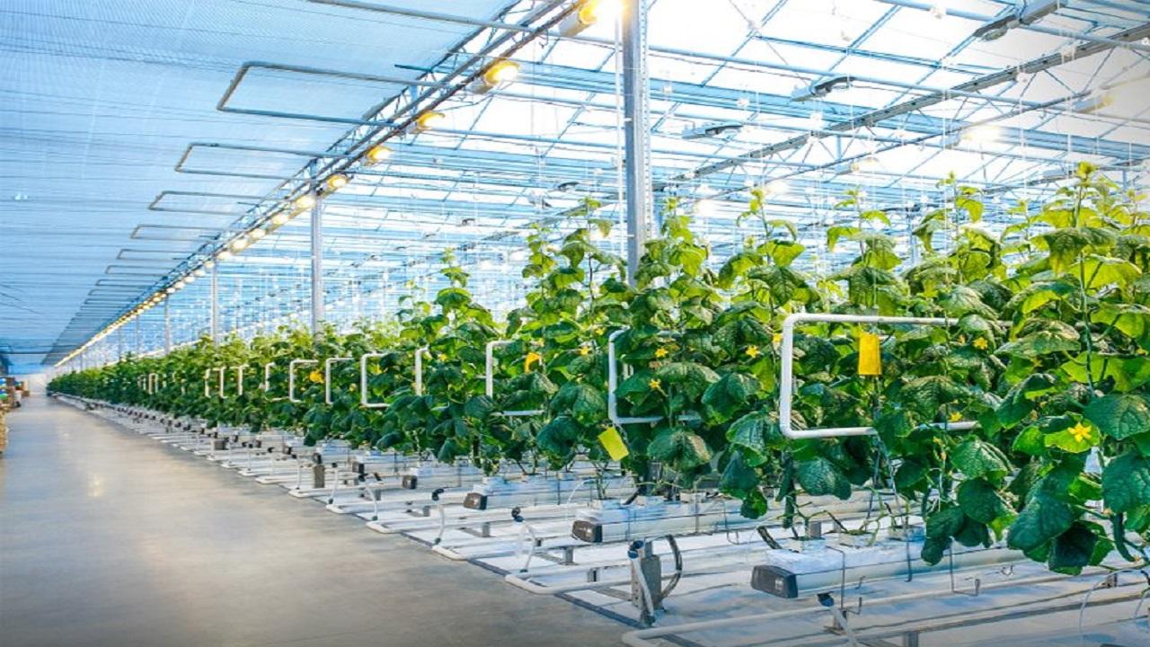 مزايا تمويلية للمشروعات الزراعية المستخدمة للتقنيات الحديثة
