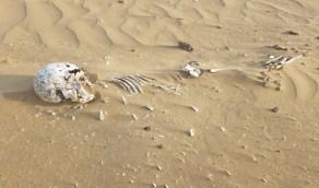 مواطن يعثر على رفات موتي متناثرة شمال القنفذة