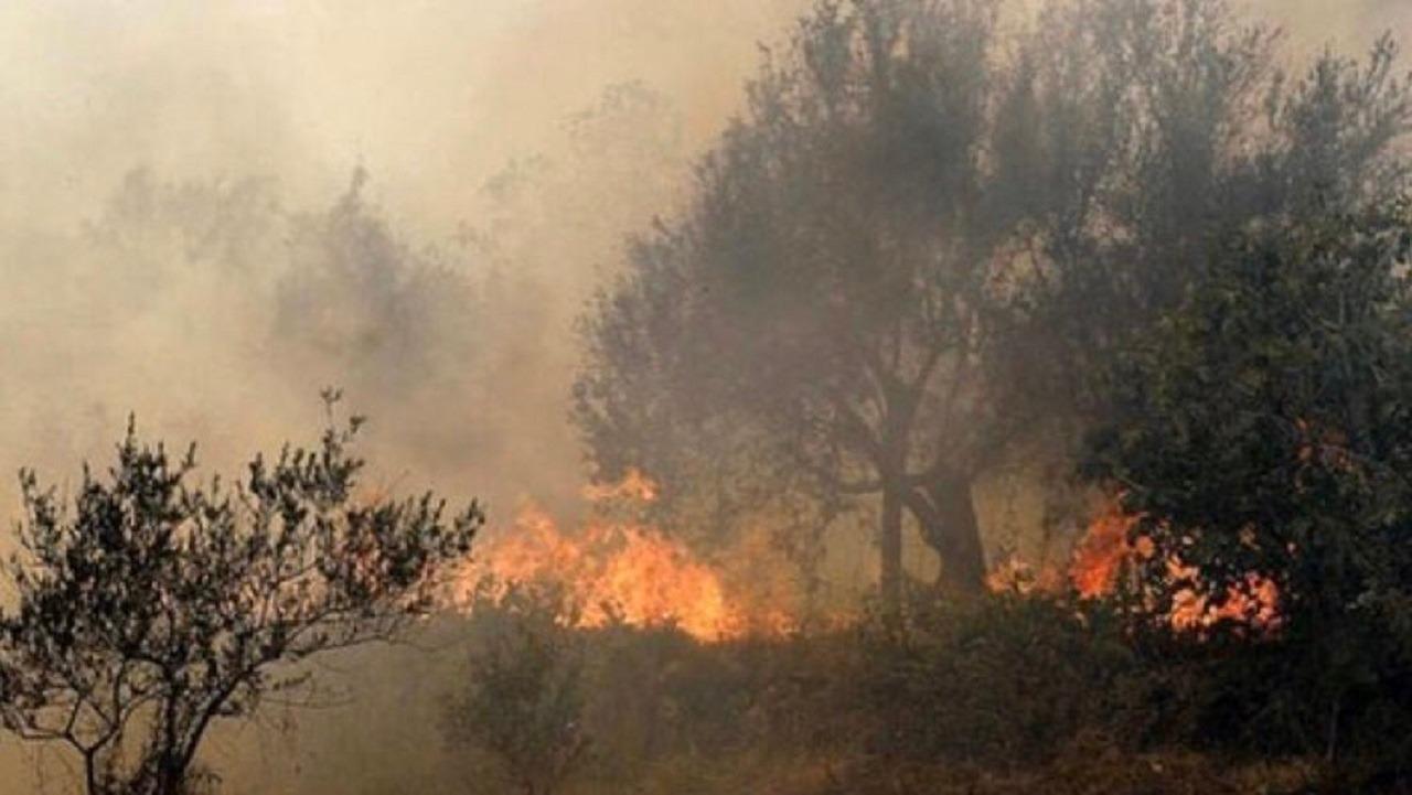 بالصور..حرائق هائلة في غابات سوريا تقترب من المناطق السكنية