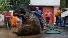 بالفيديو.. اكتشاف فأر بحجم الدب أثناء تنظيف الصرف الصحي