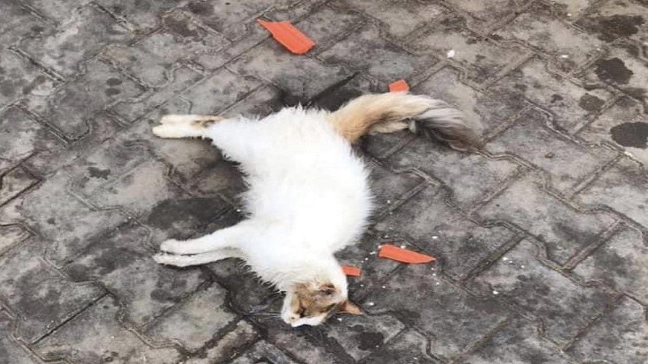 تسميم قطط المدينة يثير الغضب (صور)