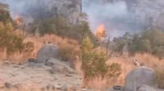 """فيديو مؤثر لـ """" ضبع """" فقد صغاره في حريق تنومة"""