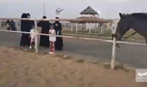 بالفيديو.. مواطنات يتدربن على الفروسية في جازان