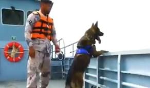 بالفيديو .. كلاب بوليسية تابعة لحرس الحدود تباشر عمليات البحث والإنقاذ