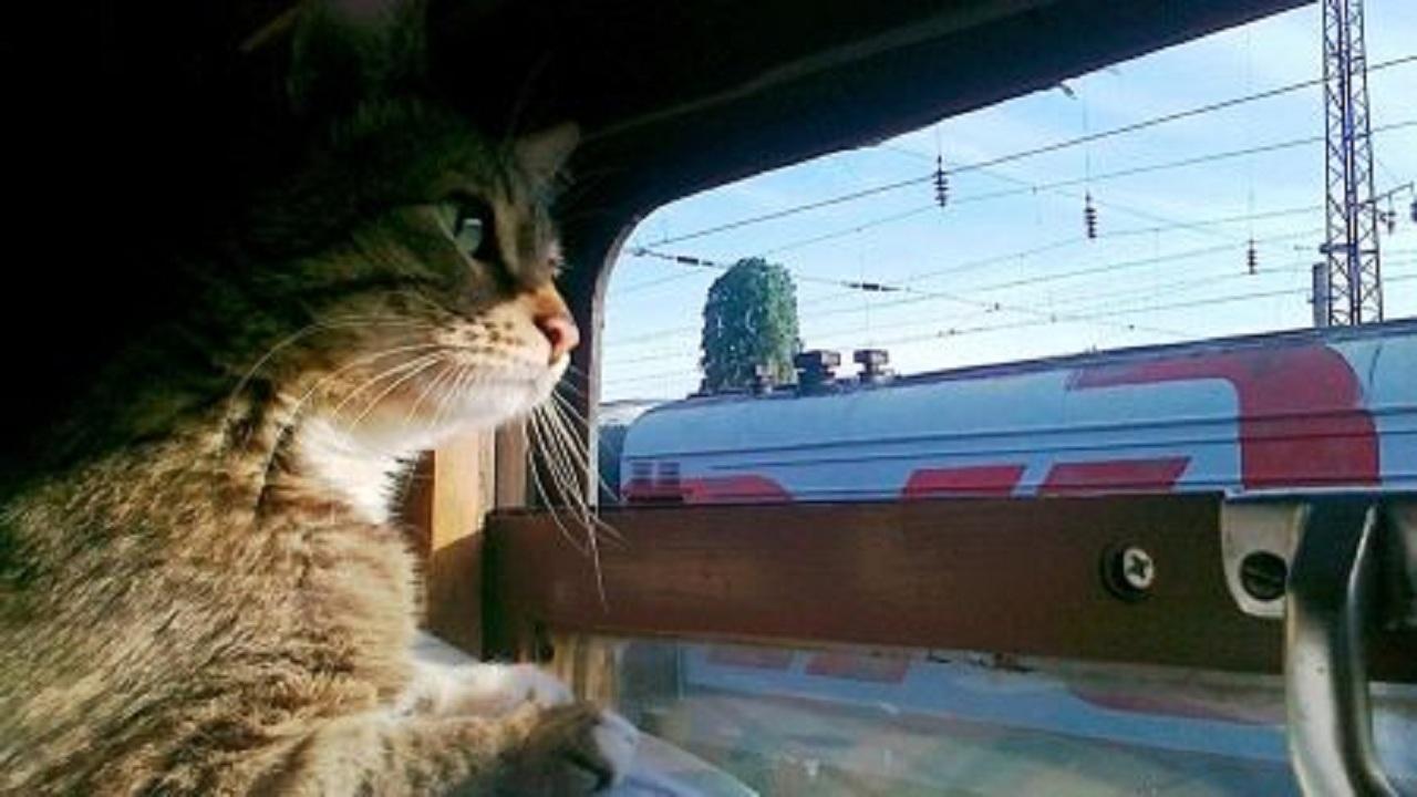 بالصور.. القبض علي قط داخل قطار سريع لسبب مثير