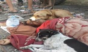 الوفاء في صورة..كلاب تحرس جثة مشرد عقب وفاته بالشارع