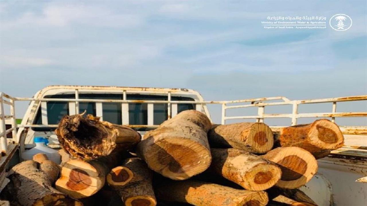 وزارة البيئة تتوعد المحتطبين بـ 10000 ريال غرامة