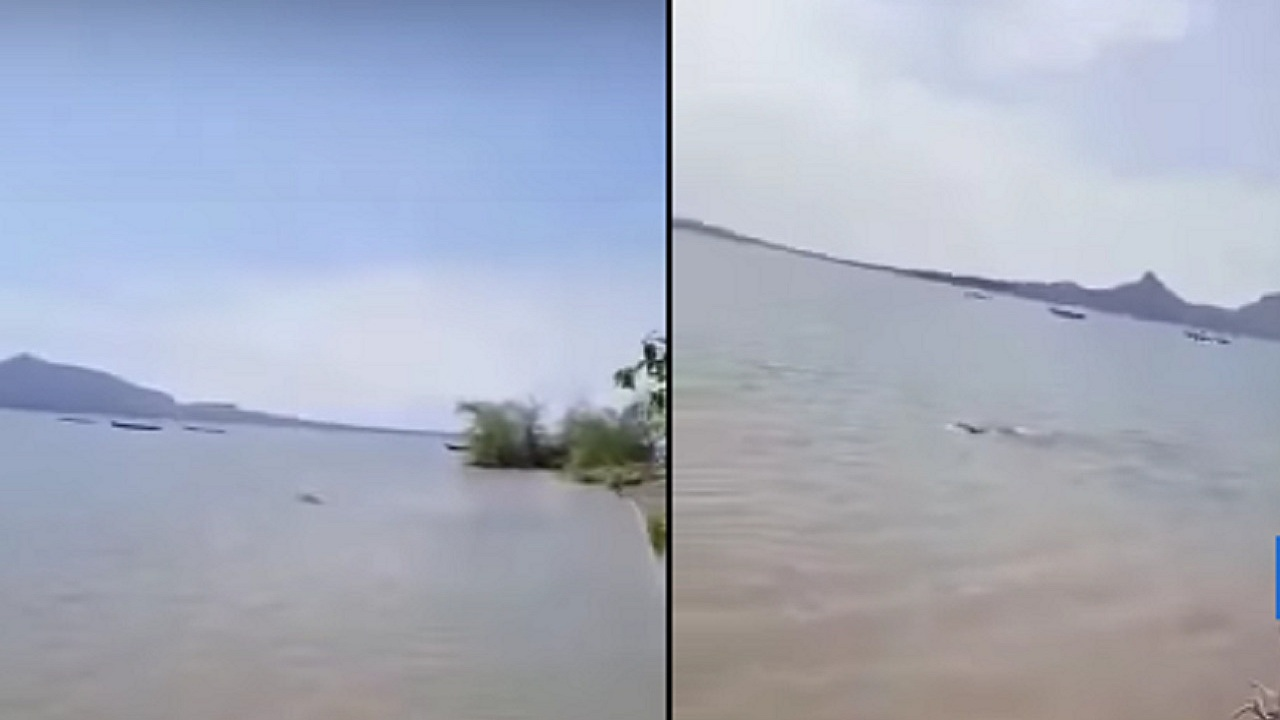 بالفيديو .. مشاهد مؤلمة لفرس نهر يغرق طفلا في بحيرة