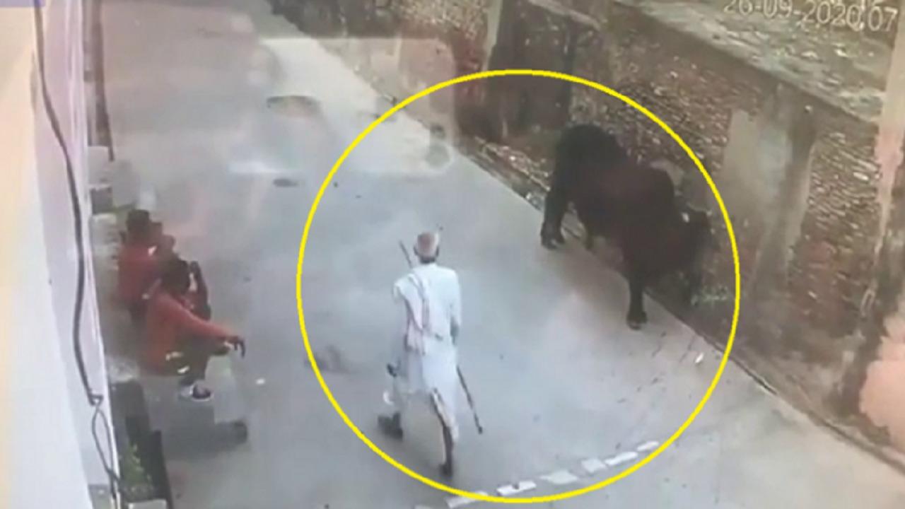 بالفيديو.. ثور ينتقم من مُسن ويُطيّره في الهواء