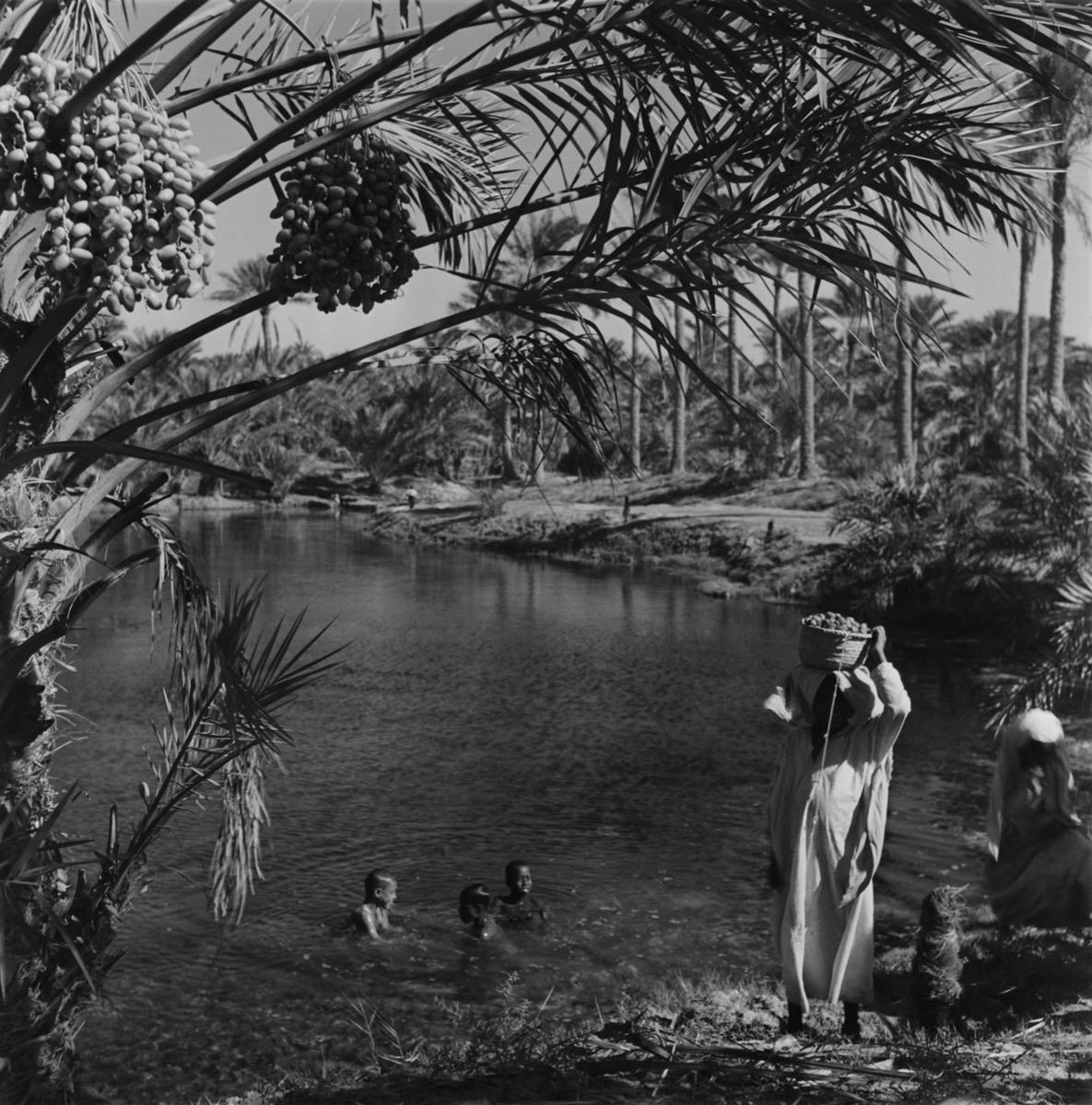 صورة نادرة لجامعي التين والتمر في واحة الهفوف مع أطفال يسبحون