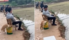 """صور طريفة لقط جائع يتسلل خلف صياد لسرقة سمكة من """"دلوه"""""""