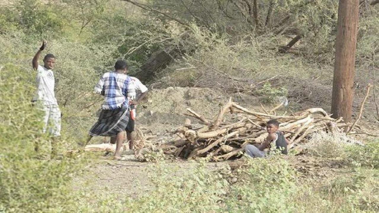 مختص بيئي: العمالة الإثيوبية سبب الحرائق