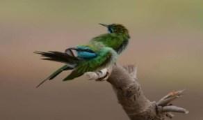 بالصور.. طيور نادرة لا تعيش إلا في جازان
