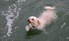وفاة طالب غرقًا أثناء إنقاذ كلبه