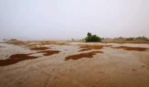 بالفيديو.. لحظة هطول الأمطار على جنوب شرق القنفذة