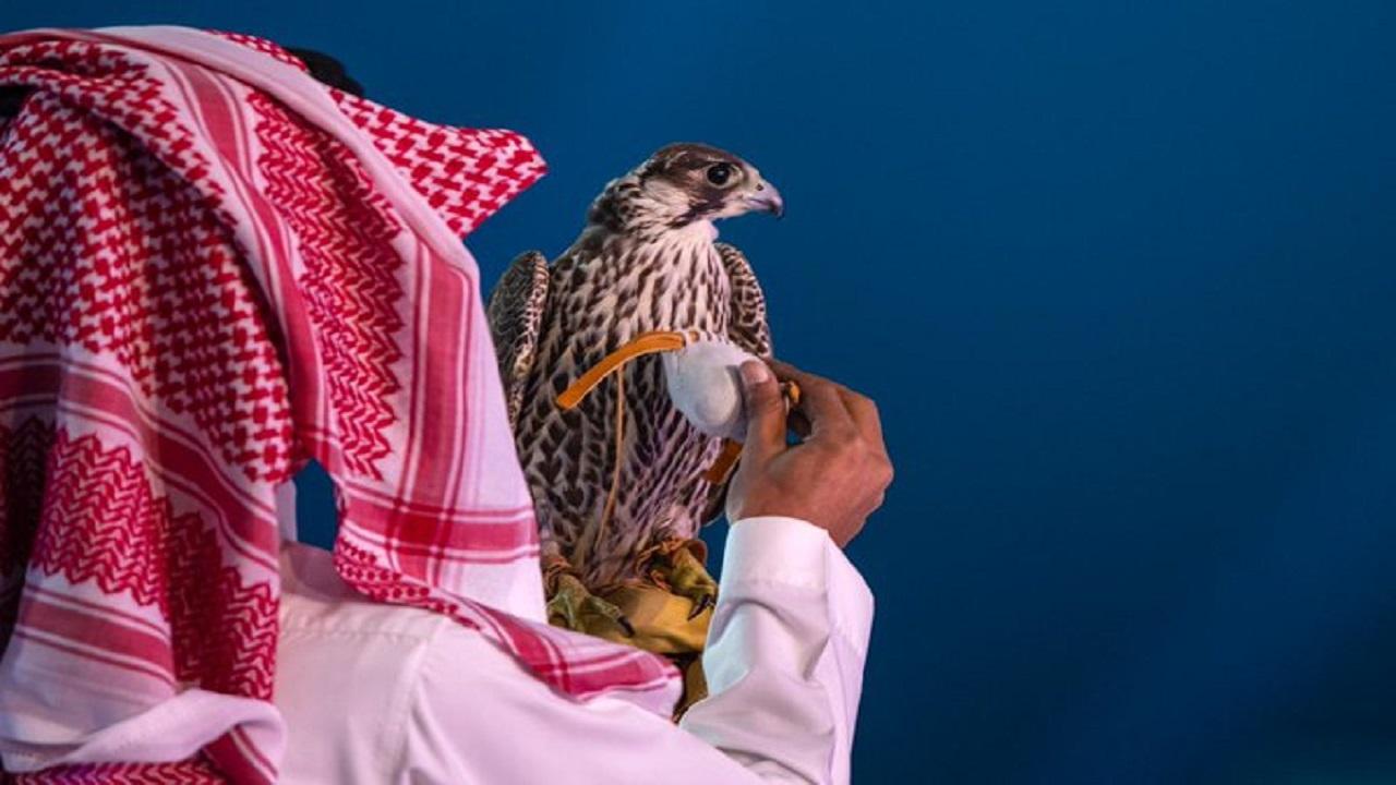 4 مواطنين يقطعون 1200 كيلو لبيع صقورهم في مزاد نادي الصقور