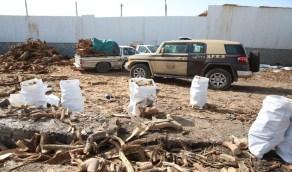 القوات الخاصة للأمن البيئي تضبط 93 طنا من الحطب المحلي المعد للبيع بالرياض