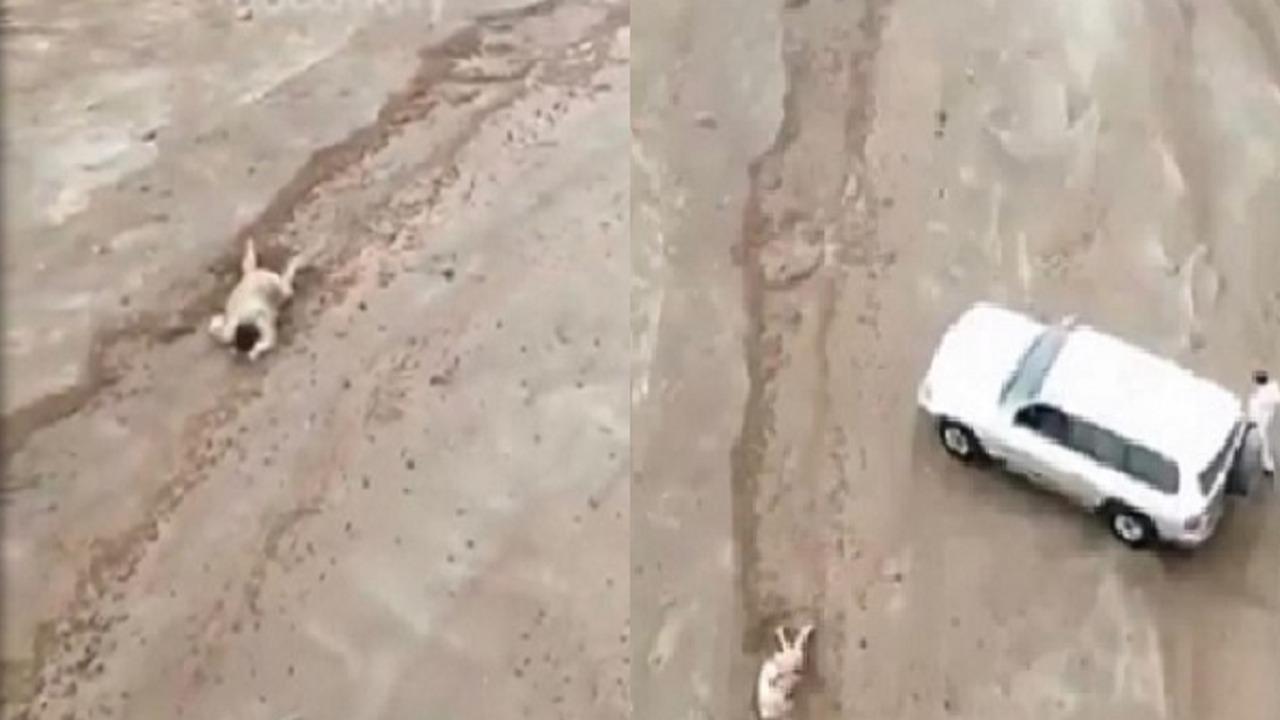 فيديو متداول يظهر لحظة العثور على رجل جرفته السيول في ينبع