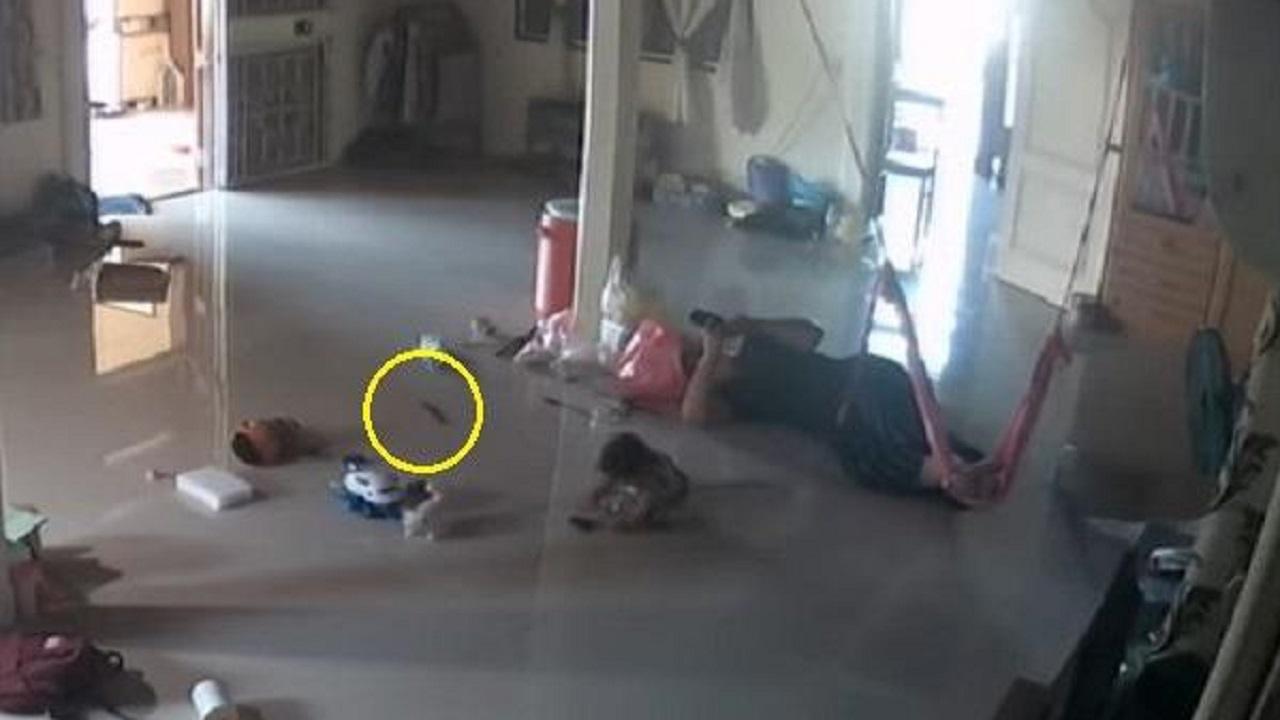 """بالفيديو.. رد فعل خطير لأم اقترب """"حريش"""" من لدغ طفلها"""