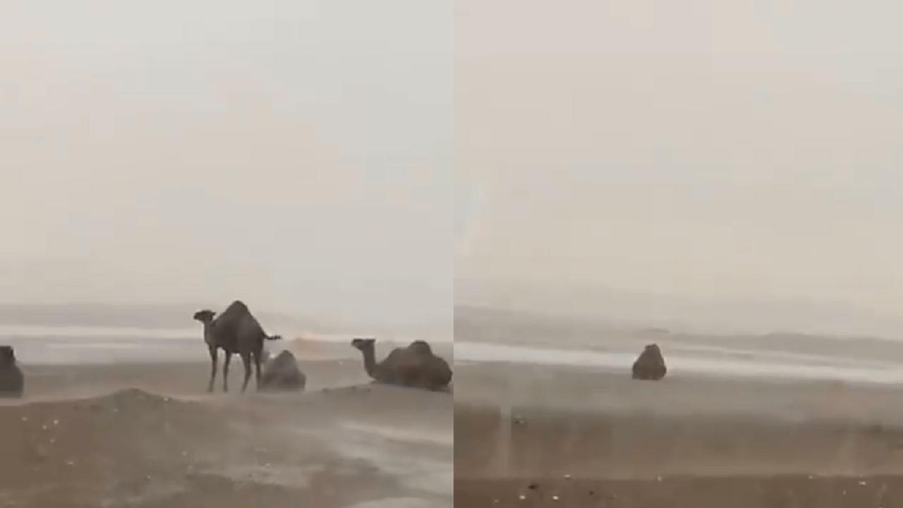 بالفيديو.. هطول أمطار غزيرة في تبوك