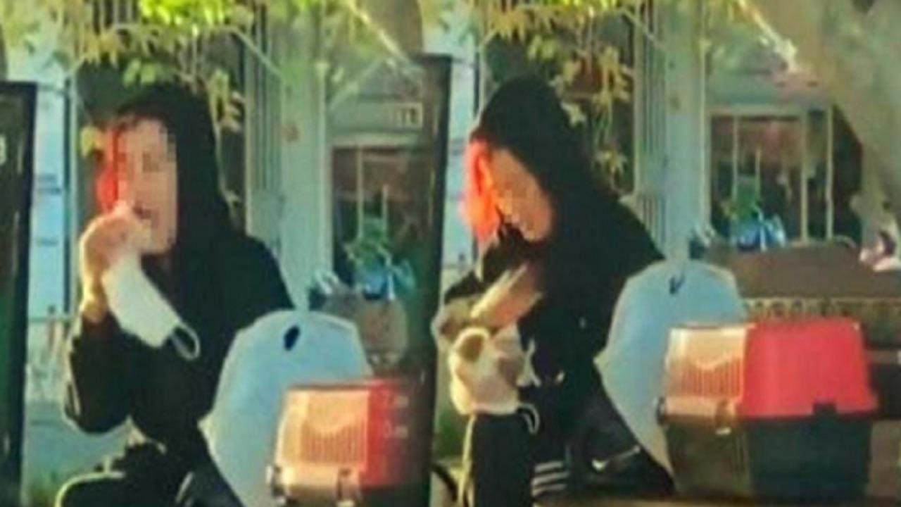 تغريم فتاة تركية عضت فأرًا
