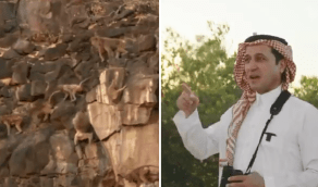 بالفيديو.. مستشار بيئي يروي كيف أنقذ نفسه من هجوم شرس لقردة البابون