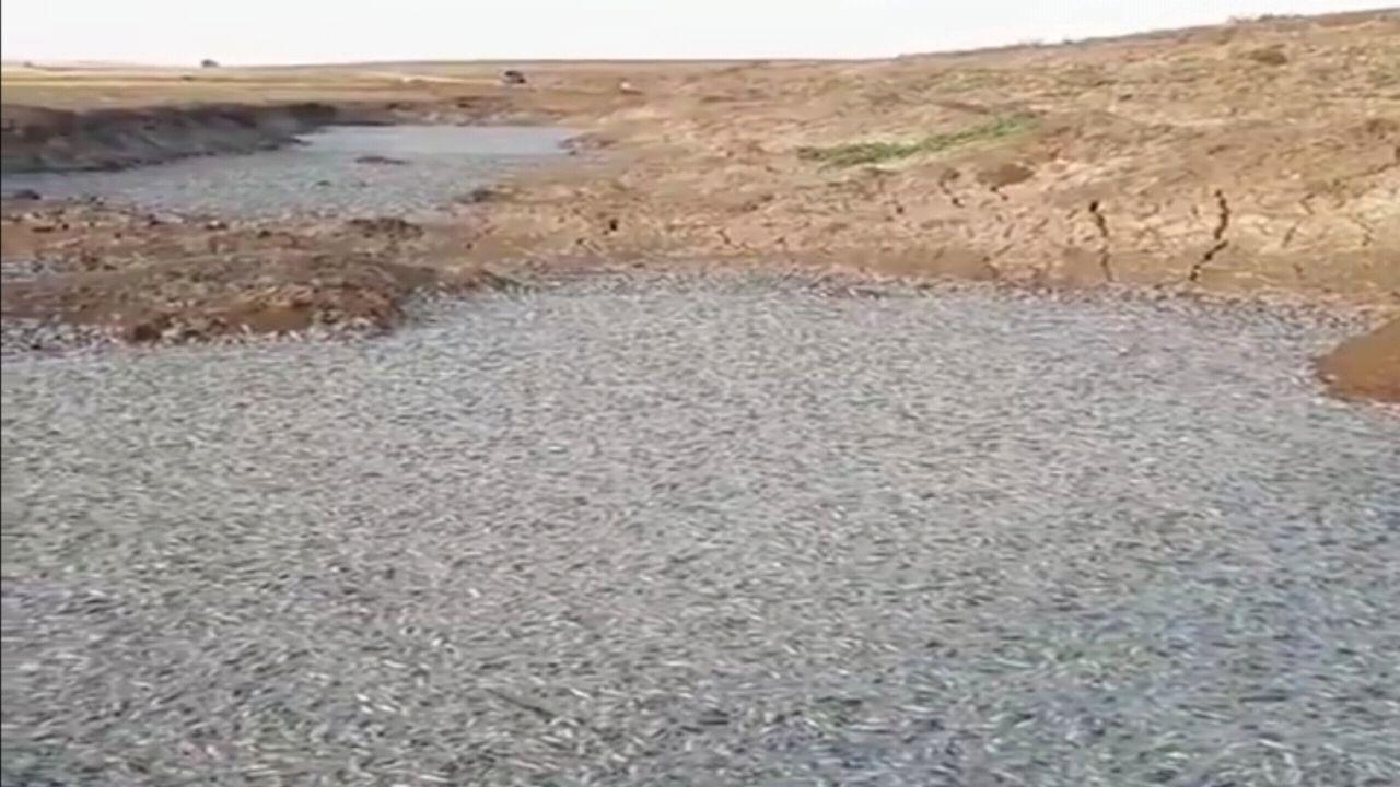 بالفيديو.. نفوق الأسماك في تركيا بعد تشغيل سد اليسو