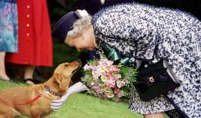 الملكة إليزابيث تعلن الحداد على كلبها