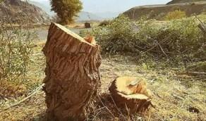 أمانة المدينة توضح غرامة قطع الأشجار