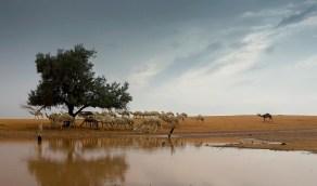 بالصور.. هطول أمطار على منطقة القصيم