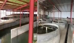 بالفيديو.. مواطن ينجح في استزراع الأسماك في سراة عبيدة
